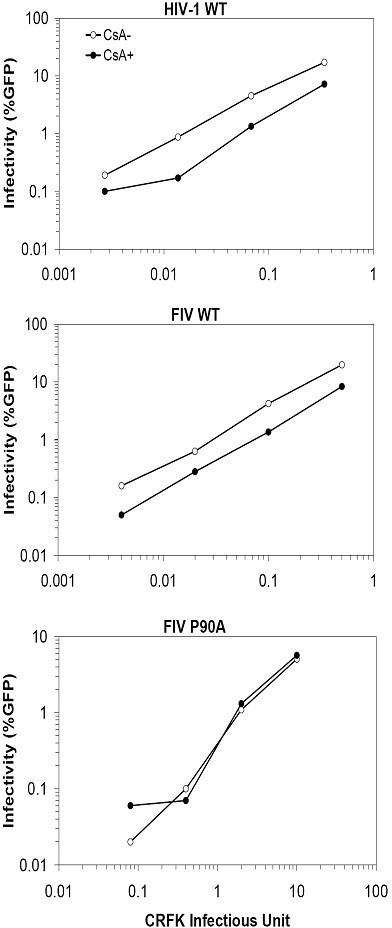 The CypA-dependency of FIV. Jurkat T cells were infected with HIV-1 wild-type (A), FIV wild-type (B), and FIV P90A (C) in the presence or absence of 1.25 μM of CsA. All viruses were first normalized on CRFK cells and equivalent CRFK infectious units were used and are plotted on the X-axis. For example, the amount of virus that gave 20% GFP positive cells on CRFK cells is 0.2 on the X-axis. The infected Jurkat cells were analyzed by flow cytometry and the infectivity is presented as % GFP+ cells.