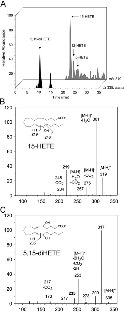 Lipidomic analysis. Profile of lipoxygenase products formed by STAg extracts. (A) Selected ion chromatogram for 15-HETE, 12-HETE, 5-HETE, and 5,15-diHETE formed by 15 μg STAg incubated with 30 μg arachidonic acid in 0.5 ml DPBS, pH 7.4, for 30 min (see Materials and Methods). Tandem mass spectra for the lipoxygenase products 15-HETE (B) and 5,15-diHETE (C). Results are representative of three independent incubations.