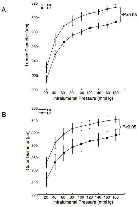 Dietary potassium supplementation increases the inner (A) and outer diameter (B) of the middle cerebral artery. Arteries were mounted in a small vessel arteriograph and the inner and outer diameters of the vessels were measured over a range of intralumenal pressures (20–180 mmHg) under zero flow and calcium free conditions. Results were compared by a two way repeated measures ANOVA (p < 0.05) n = 5 for the HK group and 6 for the LK group).