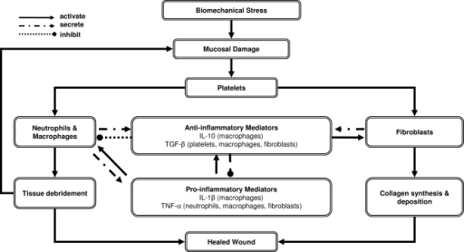 an overall flowchart of the modelthe model assumes that biomechanical stress during phonation causes - Flowchart Model
