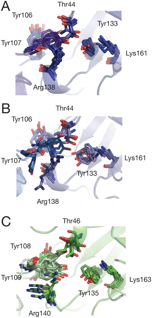 Snapshots of active site residues taken from: (A) E. coli tetramer (tet-1), (B) E. coli mutant dimer (dim-A), and (C) MRSA simulations (mrsa-1).Y107 (E. coli)/109 (MRSA) is highlighted in purple (A), blue (B) or pale green (C). Snaphots are taken every 100 ns from each trajectory.