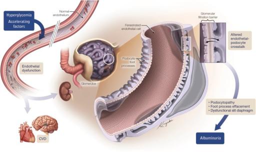 37 неделя беременности белок в моче