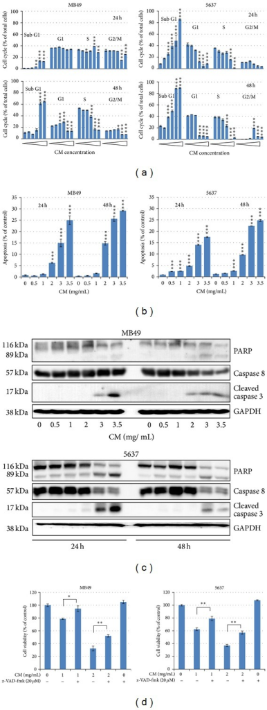 CM extract induces cell apoptosis. (a) Cell cycle distribution after CM treatment. Cells were treated with medium or CM extract (0, 0.5, 1, 2, 3, 3.5 mg/mL) for 24 h and 48 h then collected for cell cycle analysis. Data represent the mean ± SEM of triplicate. *P < 0.05, **P < 0.01, and ***P < 0.001 compared with control. (b) Apoptosis analysis by Annexin-V-PI staining assay. The apoptosis percentage implied the Annexin-V-positive and PI-negative staining cells. Data represent the mean ± SEM of triplicate. ***P < 0.001 compared with control. (c) Western blot analysis of apoptotic proteins including PARP (original 116 kDa and degraded 89 kDa forms), original caspase-8, activated caspcas-3, and GAPDH (internal control). (d) z-VAD-fmk reverses CM-induced cell death. z-VAD-fmk was added in medium 1 h before CM treatment, and cell number was counted after CM treatment for 24 h. Data represent the mean ± SEM of quadruplicate. *P < 0.05, and **P < 0.01 compared with each other. All the experiments were repeated for three times.