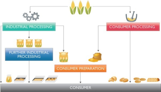 Pathways of maize from field to consumer.