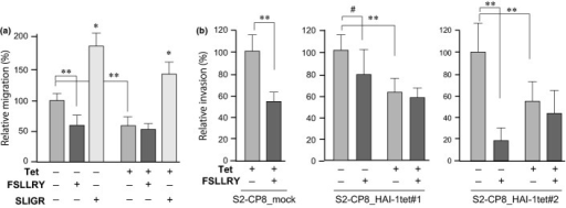 Effect of PAR-2 antagonist (FSLLRY) and agonist (SLIGR) on migration and invasion of S2-CP8 cells. (a) Effect on migration (6 h incubation) of S2-CP8_HAI-1tet#1 cells. The PAR-2 antagonist cancelled the enhanced migration caused by HAI-1 loss while the PAR-2 agonist significantly enhanced the migration. (b) Effects of PAR-2 antagonist on Matrigel invasion of S2-CP8_mock, S2-CP8_HAI-1tet#1 and #2 cells (48 h incubation). *P < 0.0001; **P < 0.0005; #P = 0.073 (Mann–Whitney U-tests). Data are mean ± SD.