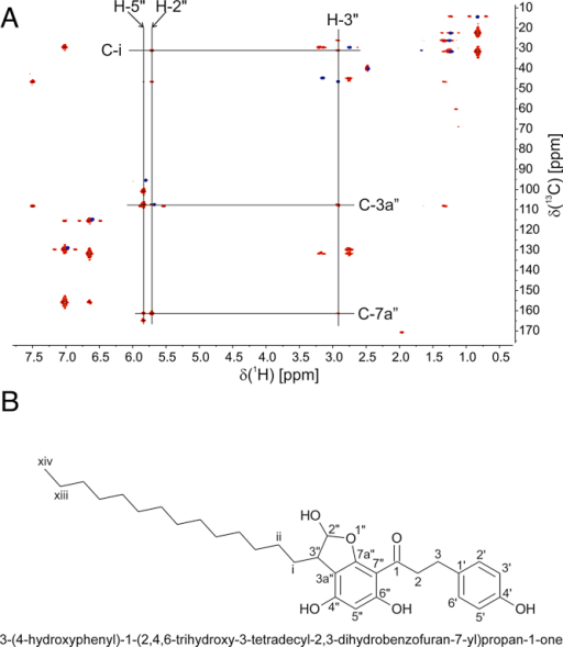 NMR analysis of the 2-ClHDA-phloretin adduct. (A) Overlay of the HSQC (blue) and HMBC (red) spectra of the 2-ClHDA-phloretin adduct. Key connectivities are indicated. (B) Adduct structure, name, and numbering scheme as applied in A and Table 1.