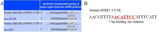 SFRP13′-UTR has miR-1/206 target binding sites. (A)SFRP1 was predicted as a target of microRNA-1/206. (B) Schematic of the predicted miRNA-1 and miRNA-206 binding sites (underlined) in the 3′ UTR of SFRP1. The binding site region was deleted in the mutant 3′ -UTR reporters.