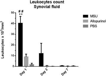 Synovial fluid leukocyte cell count from rabbit knees in the monosodium urate (MSU), allopurinol and control groups. A significant increased cell count was present at days 1 and 3 in the MSU-crystal group when compared to PBS (**P <0.01) and allopurinol crystal groups (##P <0.01).