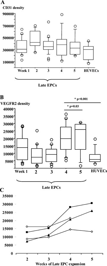 Membrane expression of CD31 and VEGFR2 on late EPCs A and B. CD31 and VEGFR2 surface density on EPCs during a 5-week ex vivo expansion period (corresponding to 45 to 60 days of culture), by comparison to HUVECs. A mean of 15 colonies were tested at each time point. Boxes represent the median values with the 25th and 75th percentiles, and the bar chart shows the 90th and 10th percentiles. EPC surface CD31 and VEGFR2 expression were quantified by flow cytometry using a calibrator (Qifikit, Dako) containing a mixture of five calibration beads coated with increasing densities of mouse IgG (approximately 3000 to 600,000 molecules). The staining reagent was a polyclonal FITC-conjugated f(ab')2 fragment of a goat antimouse antibody. Surface molecule numbers were derived from the calibration curve, after subtracting the negative isotype control value. C. Time course of VEGFR2 density on EPCs derived from four different colonies of late EPCs. VEGFR2 was quantified by flow cytometry every week during a 5-week expansion period.