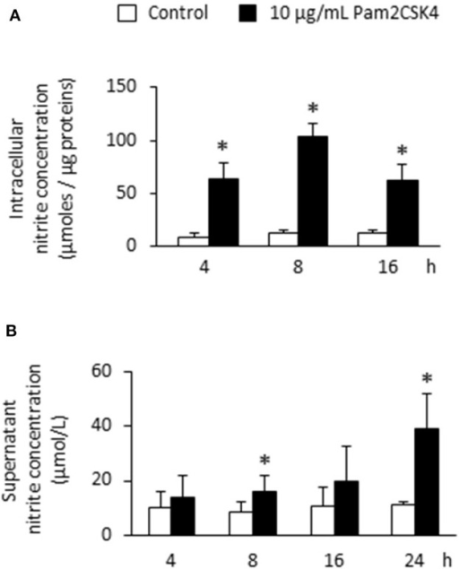 Pam2CSK4 increases NOS activity and extracellular NO production by odontoblast-like cells. (A) Analysis of intracellular NO by the measurement of nitrite concentration in cells stimulated with 10 μg/mL Pam2CSK4 for the indicated times. Production of intracellular nitrite was strongly increased in PAM2CSK4-stimulated samples, being maximal after 8 h (n = 5). (B) Determination of NO concentration in culture supernatants of odontoblast-like cells stimulated with 10 μg/mL Pam2CSK4. Nitrite progressively accumulated in the culture medium, reaching a concentration of approximately 40 μmol/L after 24 h of stimulation (n = 5). *p < 0.05.