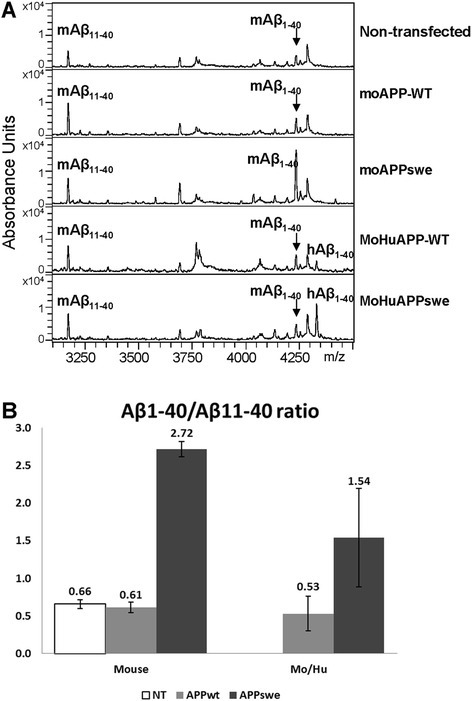 Analysis of Aβ peptides produced by mouse N2a cells transiently expressing mouse and MoHu chimeric APP genes. a Examples of mass spectrometry data from the analysis of cell culture medium of mouse N2a cells transiently transfected with expression plasmids encoding moAPP-WT, moAPPswe, MoHuAPP-WT, and MoHuAPPswe. The Aβ in the medium was immunoprecipitated with the monoclonal antibody 4G8 and then analyzed by mass spectrometry. The positions of mouse and human Aβ40 (mAβ40 and hAβ40) are noted on the spectrum traces. b Analysis of data from repeated experiments (n = 3) demonstrated that the Swedish mutations in mouse APP shift cleavage to produce a greater amount of Aβ1-40 over Aβ11-40. Standard deviation (SD) was shown at the error bars