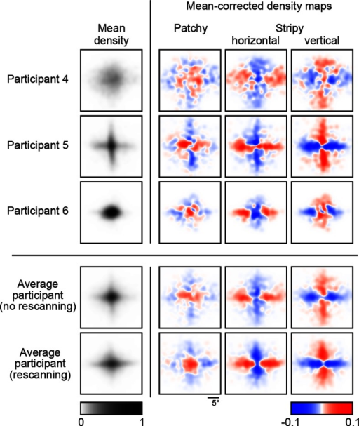 Revealing density maps in the no-rescanning control experiment.Revealing density maps in the control (no rescanning) and the average participant in the main experiment (rescanning) in which rescanning was allowed (cf. Figure 3A).DOI:http://dx.doi.org/10.7554/eLife.12215.007
