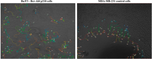 Single-cells trajectories acquired by time-lapse imaging and image processing.Cell trajectories (colored lines) obtained from applying tracking software on a time-lapse image sequence and overlaid on the last image of the sequence for Ba/F3 cells expressing p210 Bcr-Abl (left, experiment 1, sparsely seeded cells, Table 2) and for untreated MDA-MB-231 cells (right, experiment 2, cell exclusion zone assay, Table 2). Numbers indicate individual cell trajectories. Colors indicate temporal evolution of x and y cell positions (blue: earlier in time, red: later in time). The red line in the right image indicates the border between the confluent cell layer and the cell-free zone that has shifted in time. Single cells are only identified as such in experiment 2 when they escape the expanding cell sheet.