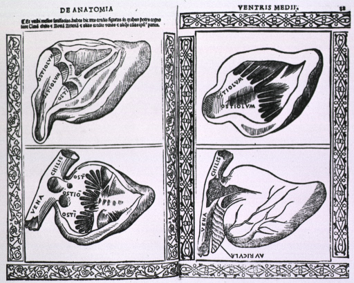 <p>Four views of the heart.</p>