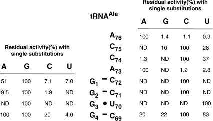 Residual (%) UDP-MurNAc-hexapeptide synthesis in the AlaRS-FemXWv coupled assay with derivatives of tRNAAla (76-nt) harboring single base substitutions in the acceptor stem. The standard assay was performed with AlaRS (800 nM), FemXWv (500 nM), l-[14C]Ala (50 µM) and the different tRNAs (ca. 5.0 µM). The reaction was incubated for 2 h at 30°C. Under these conditions, total l-[14C]Ala (0.5 nmol) was incorporated into UDP-MurNAc-hexapeptide when RNA with the wild-type sequence was used (100%). ND, not detected.