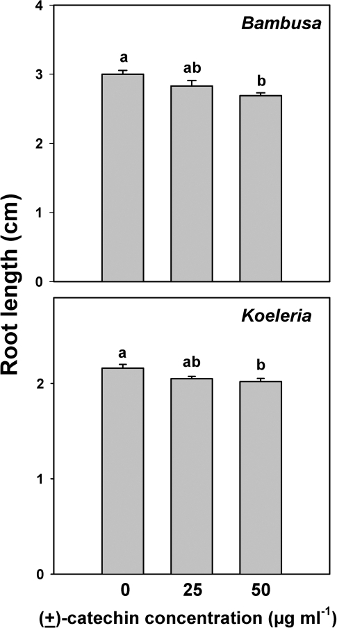 Root length of Bambusa arundinacea and Koeleria macrantha seedlings exposed to different concentrations of (±)-catechin in Petri dish experiments.Bars indicate 1 SE and shared letters indicate no significant difference among means within a growth measurement as determined by one-way ANOVA and post ANOVA Tukey tests; P<0.05.