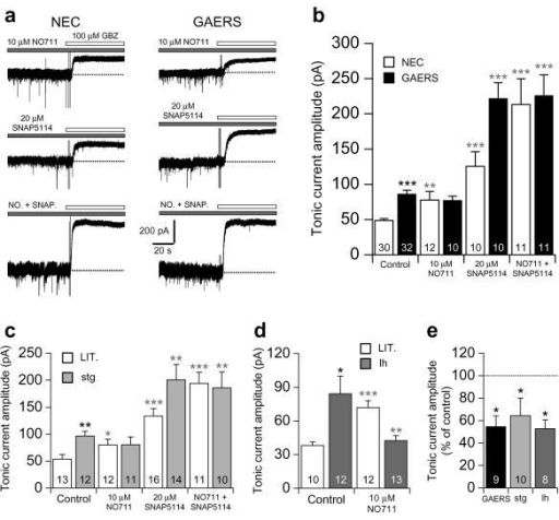 Aberrant GABA uptake by GAT–1 underlies enhanced tonic inhibition in GAERS, stargazer and lethargic. (a) Representative current traces in P18–21 NEC and GAERS showing the effects of block of GAT–1 alone (following bath application of 10 μM NO711, upper traces), GAT–3 alone (20 μM SNAP5114, middle traces), and GAT–1 and GAT–3 together (NO. + SNAP., lower traces), on tonic current amplitude, revealed by focal application of 100 μM GBZ (white bars). (b) Comparison of the effects of application of NO711 and SNAP5114 alone, and their co–application, on tonic current amplitude in NEC (white columns) and GAERS (black columns). (c) Comparison of the effect of NO711 and SNAP5114 alone, and their co–application, on tonic current amplitude in P19–21 stargazer (stg) mice (light grey columns) and control littermates (LIT., white columns). (d) Comparison of the effect of NO711 on tonic current amplitude in P27–30 lethargic (lh) mice (grey columns) and control littermates (LIT., white columns). (e) Comparison of the effect of bath application of 10 μM CGP55845 on tonic current amplitude in GAERS, stargazer and lethargic. Values were normalised to the average tonic current amplitude in the absence of CGP55845. (b), (c) and (d) * P < 0.05, ** P < 0.01 and *** P < 0.001, mutant vs. non–mutant animals under control conditions; * P < 0.05, ** P < 0.01 and *** P < 0.001, drug vs. non–drug for each strain. (e) * P < 0.05, control vs. CGP55845. For (b–e), the number of recorded neurons is as indicated.