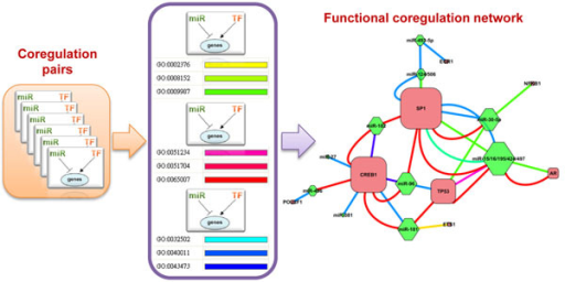 Example workflow for constructing functional coregulation network. For each coregulation pair, a function linkage was established if a GO term enriched in their shared targets. The coregulation network was generated based on these function linkages. Nodes represent regulators, and edge represents GO terms, marked with different colours.