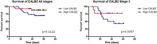 CALB2 expression in CRC patients.Kaplan-Meier survival curves for CALB2 expression across a CRC patient cohort (Dataset: GSE12945, probe ID: 20542 s at, n = 62). CALB2 expression and patient survival were analysed for stage 3 patients (n = 26, includes 5 stage 4 patients) and combined stage tumours (n = 62). The red line shows patients with high CALB2 expression and the blue line shows patients with low CALB2 expression. High and low level expression cut-points were based on median CALB2 expression.