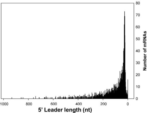 Length distribution of 5' leader sequences. The frequency of individual 5' Leader lengths was based on an analysis of 1942 primary and secondary TSSs (additional file 2: Table S1).
