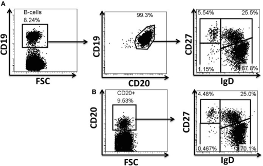 "Evaluation of antibodies for phosphoflow in naïve and BM cell subpopulations. Example of surface staining for identification of B cells and their subpopulations. CD19 and CD20 are typically used to define B cell populations (A). Several monoclonal antibodies were evaluated to define B cells, as well as naïve and memory B cell subpopulations during the optimization of the staining technique for phosphoflow. The CD19 marker is lost when cells are treated for phosphoprotein determinations; however, CD20 (H1 clone) defines these cells appropriately and therefore was subsequently used in phosphoflow assays (B). Polyclonal anti-IgD sera (goat anti-human) used in a two step staining technique (see ""Materials and Methods"" for details) provided appropriate resolution of naïve and memory B cell subpopulations for phosphoflow staining (B). FSC, forward scatter."