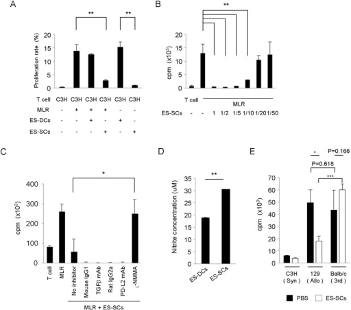 ES-SCs suppress T cell proliferation.(A) MLR assay: C3H T cells vs. bone marrow-derived DCs. Where indicated, 129 ES-DCs or ES-SCs were added to MLR culture and inhibitory effects were measured by proliferation rate (CFSE cell division). (B) ES-SCs and MLR assay: C3H T cells were stimulated with irradiated bone marrow-derived DCs, and then graded numbers of ES-SCs were added to MLR culture. T cell proliferation was estimated by [3H] thymidine uptake. Results are expressed as mean cpm ± SD. (C) ES-SCs and MLR assay. Several immunosuppressive molecules were blocked by specific inhibitors: Anti-TGFβ mAb (10 µg/mL), anti-PD-L2 mAb (10 µg/mL), L-NMMA (50 µM), or corresponding isotype-matched controls were added. T cell proliferation was estimated by [3H] thymidine uptake. Results are expressed as mean cpm ± SD. (D) Measurement of NO concentration in the supernatants of ES-DCs or ES-SCs. (E) Specificity of immune suppression by ES-SCs. Splenic T cells from ES-SCs- or PBS-administered C3H mice were stimulated with bone marrow-derived DCs from the indicated mice including C3H (Syn; Syngeneic), 129 (Allo; allogeneic but same background as ES-SCs), and BALB/c (3rd; allogeneic, third party). T cell proliferation was estimated by [3H] thymidine uptake. Data represent mean ± SD of three wells. Similar results were obtained from three independent experiments. *P<0.05, **P<0.01, ***P<0.001.