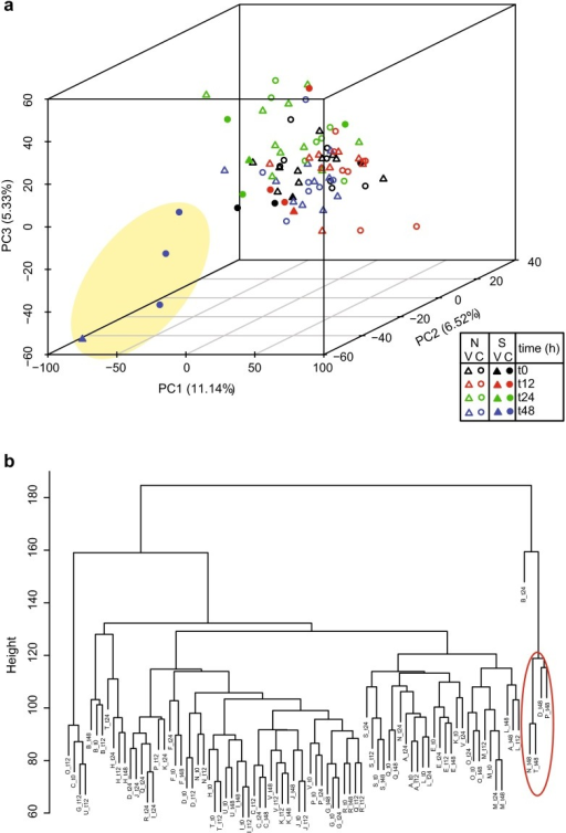 Principal components and hierarchical clustering plot. a The first three principal components are plotted with the proportion of variance explained by each component. The yellow oval highlights the samples taken from the four subjects with moderate/severe LCI 48 h post-challenge. N none or mild LCI, S moderate/severe LCI, V vaccinee, C control. b The hierarchical tree illustrates the relationship between clusters of samples. The height of the branches indicates the strength of the separation. The red oval highlights the samples taken from the four subjects with moderate/severe LCI 48 h post-challenge
