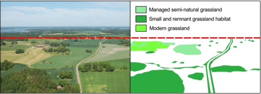Present-day photograph from an area of Selaön, southeastern Sweden (left) with interpretation of grassland habitat (right, until dashed line). Very little managed semi-natural grassland is left, but grassland communities can still persist in both abandoned grasslands of various sizes and in road verges. Modern grasslands are less species-rich than historical grasslands, but all additional features can contribute to increased connectivity in the landscape