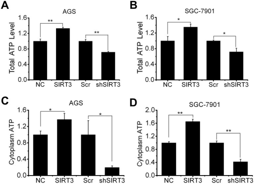SIRT3 expression is associated with cellular bioenergetics.A and B, total cellular ATP levels were tested in AGS (A) and SGC-7901 (B) cells with SIRT3 overexpression or knockdown. C and D, AGS (C) and SGC-7901 (D) cells with SIRT3 overexpression or knockdown were treated with rotenone (2 μM, 24 hours) to inhibit the oxidative phosphorylation and then cytoplasm ATP levels were measured. Data were normalized by control (NC or Scr) cells and presented as mean ± S.E. (n = 3; *, p < 0.05; **, p < 0.01).