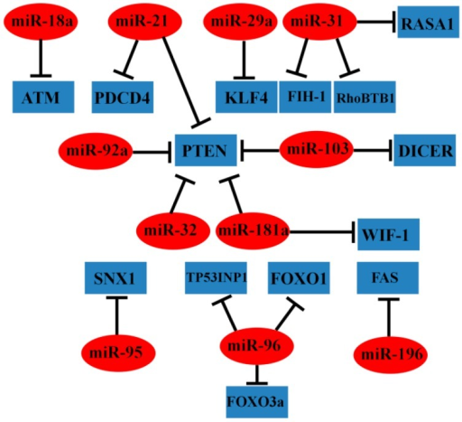 Representative oncogenic miRNAs and their target genes in CRC.