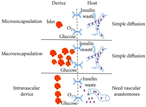 Schematic representation of immunoisolation device or bioartificial pancreas. They can be commonly separated into two categories, intravascular and extravascular devices. The latter can further be divided into macroencapsulation and microencapsulation devices. Intravascular and extravascular classifications are based on whether or not it is connected directly to the blood circulation. The macroencapsulation and microencapsulation classifications depend on whether it contains one or more islets in the device.