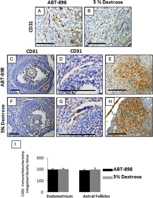 CD31 and vimentin immunohistochemistry of ABT-898 treated and 5 % dextrose control uteri and ovaries. Semi-quantitative analysis of CD31+ blood vessels in the endometrium found no significant difference (p = 0.45, i) between ABT-898 (a) and 5 % dextrose (b) groups. Immunohistochemistry for CD31 also found that blood vessel development around antral follicles was not altered by ABT-898 (c, f, d, g), and semi-quantitative analysis found no significant difference (p = 0.75). Vimentin immunohistochemistry showed no difference in structure or number of microvessels (green arrows) between ABT-898 (e) and 5 % dextrose (h) corpus luteum. Scale bars represent 75 μm. FOV: Field of view