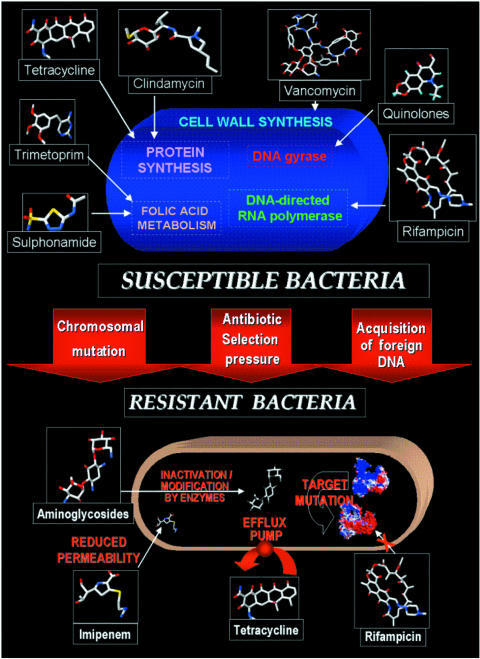 Schematic representation of the emergence of resistant bacteria.