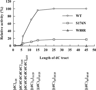 Effect of dC tract length on enzymatic activities of wild-type and mutant (S176N or W88R) forms of Endo IV. Enzymatic activity was determined by measurement of the amount of acid-soluble nucleotides released from the substrate (10 μM). All substrates with the exception of [(dC)45]45/45 contained 25 nt. The specific activity of the wild-type (WT) enzyme with the [(dC)25]25/25 substrate was ∼8.0 U/mg. Relative activity was calculated by dividing the enzymatic activity of each Endo IV enzyme observed with each substrate by that apparent with the wild-type enzyme and [(dC)25]25/25 as substrate. Data are means of values from two independent experiments.