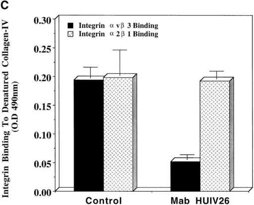 Integrin binding to triple helical and denatured human collagen IV. Microtiter wells were coated with either triple helical or denatured human collagen IV (25 μg/ml). Purified human integrins α1β1, α2β1, α5β1, or αvβ3 (0.5–4 μg/ml) were allowed to bind to triple helical collagen IV (A) or denatured collagen IV (B) for 1 h at 37°C. Integrin binding was detected with antiintegrin antibodies. (C) Purified human integrins α2β1 and αvβ3 (1.0 μg/ml) were allowed to bind to denatured collagen IV–coated plates for 1 h at 37°C in the presence or absence of Mab HUIV26 or an isotype-matched control antibody. Integrin binding was detected by incubation with either polyclonal antibody directed to α2 or α3 integrins. Data bars represent the mean OD ± standard deviations from triplicate wells.