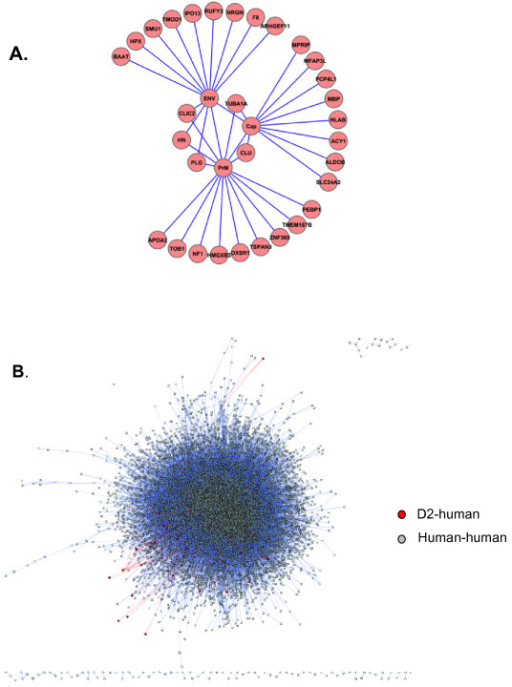 "Graphical representation of the DENV2 structural protein interactome. (A) Primary network formed by the D2 structural proteins and its targets, obtained experimentally in the two-hybrid assay. (B) Topological representation of the network in (A) overlayed on a human-human interaction network. Red nodes and red edges represent the nodes and edges seen in ""A"" and blue nodes and edges the remainder of the human-human network."