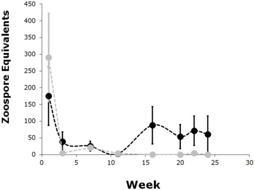 Average zoospore equivalents over time.JEL423 infected individuals: black. SRS810 infected individuals: grey. Week indicates the number of weeks after last inoculation. Error bars are ± one standard error of the mean.