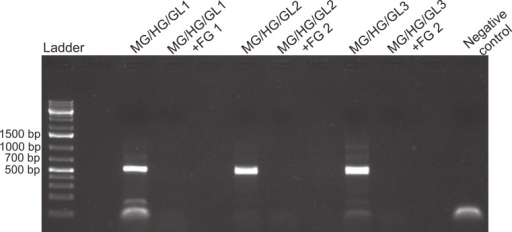 Foregut inhibition of 16s amplification.Results of the amplification of bacterial DNA in crab tissues using universal 16s primers (see Methods). Samples from three different crabs were prepared to comprise either mixtures of midgut (MG), hindgut (HG) and gills (GL) together, or these three combined with foregut (FG) extracts from the same respective individual. The negative control assessed potential bacterial contamination and contained no crab or fish DNA. Empty lanes in the gel are not labeled.