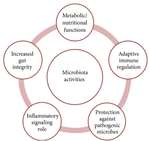 The different routes of interaction between the microbiota and the host.