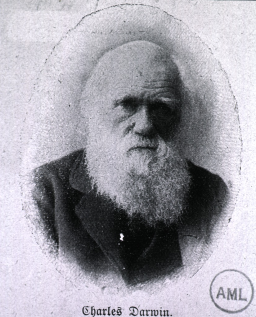 <p>Head and shoulders, full face; as an old man.</p>