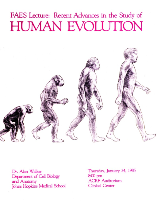 <p>Four figures are walking toward the right side of the poster, beginning with a chimpanzee and moving through stages of evolution to Homo sapiens.  The date of the lecture is Thursday, January 24, 1985.</p>