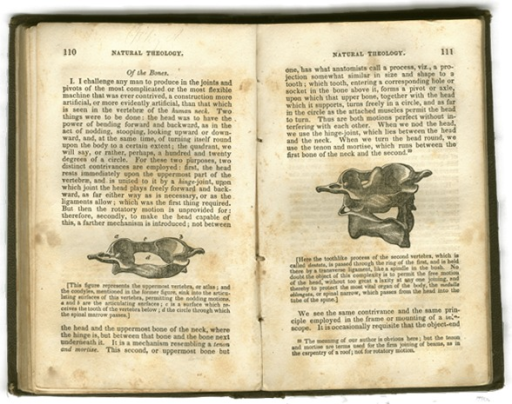 <p>Image of facing pages 110-111 from W. Paley's Natural theology, including text and illustrations of the uppermost cervical vertebrae.</p>