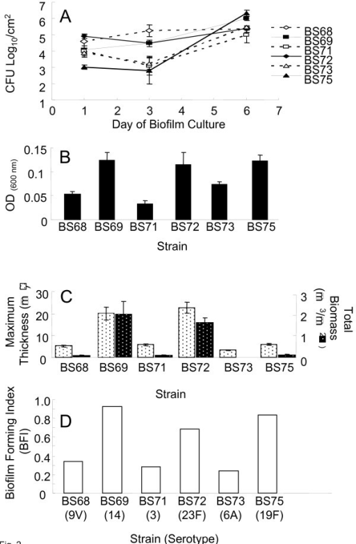 Quantitative assessment of biofilm development by clinical pneumococcal isolates. Fig. 2A. Biofilm development by clinical isolates at days 1, 3 and 6 of culture on polystyrene plates as shown by viable adherent cells (CFUs/cm2). Points represent an average of three duplicate wells per time point in two independent experiments. Error bars represent SD. Fig. 2B. Biofilm development (initial attachment) assayed by crystal violet absorbance comparing 6 clinical pneumococcal isolates on polystyrene over 24 hours. Bars show average triplicate samples of 5 independent experiments. Bars represent SD. Fig. 2C. COMSTAT assessment of pneumococcal biofilm development after 6 days of culture. Two parameters of surface attached pneumococci are shown: maximum thickness (biofilm towers) (left axis) and biomass (biofilm volume) (right axis). Bars represent an average of 3–5 images taken from duplicate plates in 2 independent experiments (minimum n = 12). Error bars represent standard error of the mean. Fig. 2D. Biofilm forming index (BFI) of the 6 pneumococcal clinical strains (serotype in parentheses) combining statistical analyses from the widely used biofilm assays: CFU/cm2, CV assay and COMSTAT analysis. The index ranks each strain according to biofilm formation.