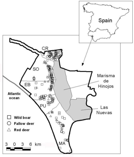 Doñana National Park, Spain. Park boundary is marked by a solid line. From north to south: CR Coto del Rey; SO Los Sotos; EB Estación Biológica; PU El Puntal; MA Marismillas. Shadowed areas are marshlands used as cattle pastures (Marisma de Hinojos and Las Nuevas). Symbols show sampling sites for wild boar (squares), fallow deer (circles) and red deer (triangles).