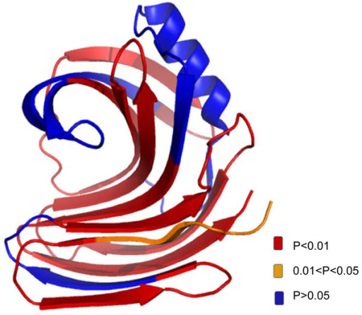 The overlay of p value with 3D structure of xylanase. The color legend indicats the level of confidence.