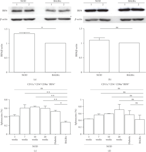 Expression of IRF4 in splenic DCs of diabetes-prone NOD mice and diabetes-resistant BALB/c mice. Proteins were extracted from CD11c+-purified splenic DCs from NOD and BALB/c mice and analyzed by Western blotting for (a) IRF4 or (b) IRF8 expression. The relative intensities of the bands were assessed using the NIH Image software and normalized to reference actin bands to establish a ratio of IRF4/actin (a), lower panel) and (b), lower panel) IRF8/actin. The expression levels observed in BALB/c were arbitrarily set as a unitary value. Data are representative of 2 independent experiments (Exp1 and Exp2). (c) and (d) splenocytes from NOD and BALB/c mice were stained for the CD11c, CD4, and CD8α surface markers in combination with intracellular staining with an anti-IRF8 or anti-IRF4 mAb and analyzed by flow cytometry. Data represent the average percentage of CD11c+CD4+CD8α−IRF4+-positive (c) and CD11c+CD4−CD8α+IRF8+-positive (d) cells of two independent experiments. Error bars correspond to the averages ±S.D (*P < .05, **P < .01 and ***P < .001).