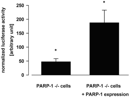 The expression of h PARP-1 in vivo increases the luciferase enzyme activities assayed in Del4 reporter plasmid transfected PARP −/− MEF cells.Logarithmically growing PARP −/− MEF cells were transfected with Del-4 plasmid together with the pcDNA3.1-beta-galactosidase expressing plasmid and in the absence or in the presence of h PARP-1 expression (pcDNA3.1-parp-1 plasmid). After two days of incubation cells were splitted into six-well plates and grown for a day further. Than cells were harvested, lysed and their luciferase and beta-galactosidase enzyme activities were determined. The luciferase enzyme activities were normalized for beta-galactosidase activities and are shown in the figure. Asterisks show significant difference in the reporter enzyme activities between the two pools of sample (p<0.05).