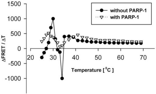 PARP-1 modifies the effect of increasing temperature on the FRET activities of the F-c-myc GQ-R molecule.FRET melting curves were taken in the absence or in the presence of 1 µg h PARP-1 and using a 2°C/2 min temperature gradient. Excitation was at 485 nm and emission was recorded at 585 nm. From the recorded data ΔFRET/ΔT values were calculated and plotted (ordinate) versus the applied temperatures (abscissa).