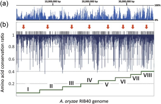 Distribution of mutations in the RIB326 genome. (a) The nucleotide substitution percentage and (b) amino acid conservation ratio in the A. oryzae RIB40 genome against RIB326 were plotted using a 10-kb window with a 5-kb overlap. Each chromosomal region (I–VIII) is indicated by dark green stepwise line located at the bottom of the graph, and the position of the centromere in each chromosome deduced from the terminal of scaffolds is indicated by red arrows. The short vertical gray lines located in at the middle of the figure represent the position of NSBs determined from syntenic analysis between A. oryzae, A. nidulans, and A. fumigatus.1