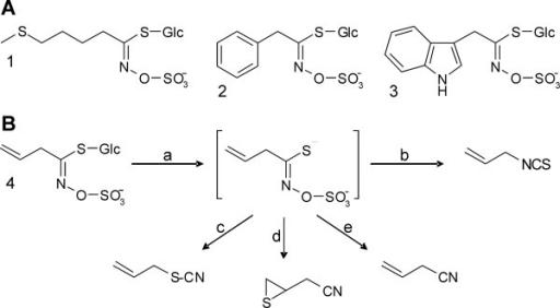 Glucosinolates and glucosinolate hydrolysis. A. Example | Open-i
